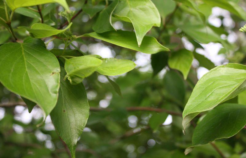 Treefbcover